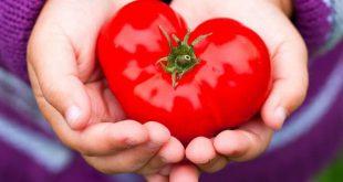 گوجه فرنگی مناسب برای تهیه رب گوجه چی چی لاس