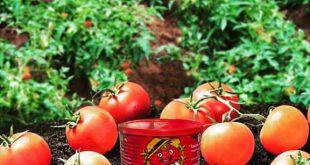 رب گوجه با بسته بندی قوطی