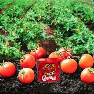 رب گوجه فرنگی صنعتی درجه یک چی چی لاس